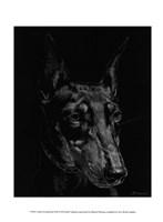 Canine Scratchboard XIII Fine Art Print