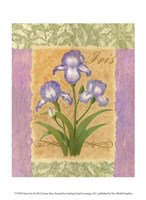 "Sweet Iris by Louise Max - 10"" x 13"""