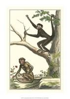 """11"""" x 16"""" Monkeys Apes"""