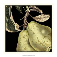 "Dramatic Pear by Vision Studio - 16"" x 16"""