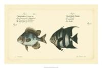 Antique Fish II Fine Art Print