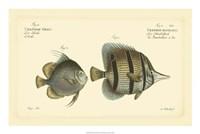 Antique Fish III Fine Art Print
