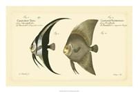 Antique Fish IV Fine Art Print