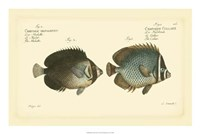 Antique Fish V Fine Art Print