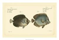 "Antique Fish V by Carl Bloch - 24"" x 16"""