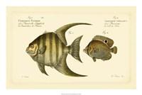 "Antique Fish VI by Carl Bloch - 24"" x 16"""