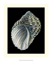 """Treasures of the Sea III by Ehret and Redoute - 14"""" x 16"""" - $24.99"""