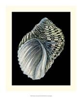 Treasures of the Sea III Fine Art Print