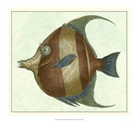 Angel Fish II Fine Art Print