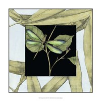 """17"""" x 17"""" Dragonfly Pictures"""