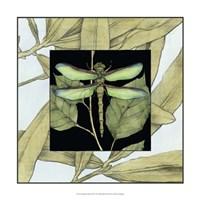 "Dragonfly Inset II by Jennifer Goldberger - 17"" x 17"" - $24.99"
