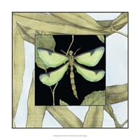 "Dragonfly Inset IV by Jennifer Goldberger - 17"" x 17"" - $24.99"