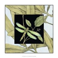 "Dragonfly Inset V by Jennifer Goldberger - 17"" x 17"" - $24.99"