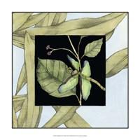 """Dragonfly Inset VI by Jennifer Goldberger - 17"""" x 17"""" - $24.99"""