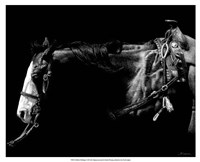 """21"""" x 17"""" Horse Pictures"""