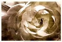 """Elegant Peony III by Christine Zalewski - 25"""" x 17"""", FulcrumGallery.com brand"""
