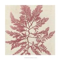Brilliant Seaweed I Fine Art Print