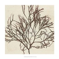 "Brilliant Seaweed II by Vision Studio - 18"" x 18"""