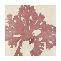 Brilliant Seaweed V Fine Art Print