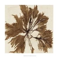 "Brilliant Seaweed VI by Vision Studio - 18"" x 18"""