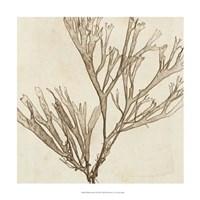 "Brilliant Seaweed VII by Vision Studio - 18"" x 18"""