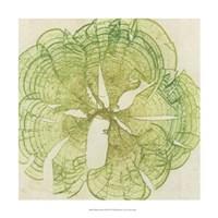 "Brilliant Seaweed VIII by Vision Studio - 18"" x 18"""