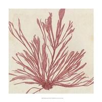 Brilliant Seaweed IX Fine Art Print