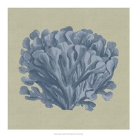 "Chambray Coral III by Vision Studio - 18"" x 18"""