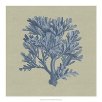 "Chambray Coral IV by Vision Studio - 18"" x 18"""