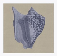 "Chambray Shells I by Vision Studio - 18"" x 18"""