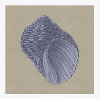 "Chambray Shells III by Vision Studio - 18"" x 18"""