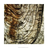 """Nature's Textures III by Vision Studio - 18"""" x 18"""" - $18.99"""
