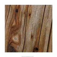 "Nature's Textures IX by Vision Studio - 18"" x 18"" - $18.99"
