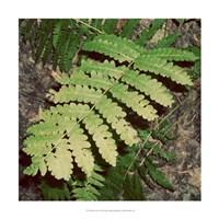 """Shady Grove I by Alicia Ludwig - 18"""" x 18"""" - $18.99"""