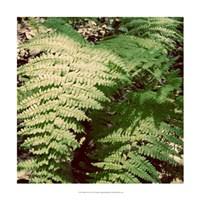 """Shady Grove II by Alicia Ludwig - 18"""" x 18"""" - $18.99"""