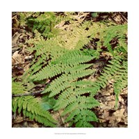 "Shady Grove III by Alicia Ludwig - 18"" x 18"" - $18.99"