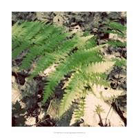 """Shady Grove IV by Alicia Ludwig - 18"""" x 18"""" - $18.99"""