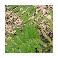 "Shady Grove V by Alicia Ludwig - 18"" x 18"" - $18.99"