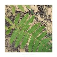"Shady Grove VI by Alicia Ludwig - 18"" x 18"" - $18.99"