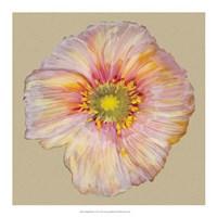 """Poppy Blossom I by Alicia Ludwig - 18"""" x 18"""""""
