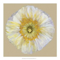 """Poppy Blossom II by Alicia Ludwig - 18"""" x 18"""""""