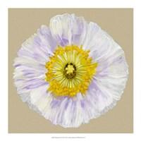 """Poppy Blossom IV by Alicia Ludwig - 18"""" x 18"""""""