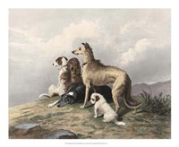 Highland Dogs Fine Art Print