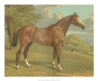 "Cassell's Thoroughbred I by Cassell - 22"" x 18"""
