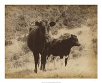 "Lone Star Cows I by Jarman Fagalde - 22"" x 18"", FulcrumGallery.com brand"