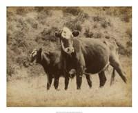 "Lone Star Cows II by Jarman Fagalde - 22"" x 18"", FulcrumGallery.com brand"