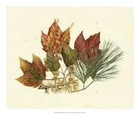 Red Maple, Tamarack & White Pine Fine Art Print