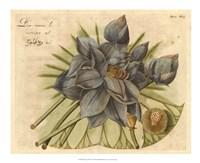 """Blue Lotus Flower II by Vision Studio - 22"""" x 18"""""""