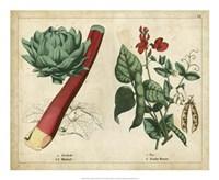 Kitchen Vegetables & Roots II Framed Print