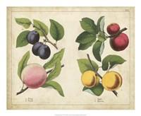Kitchen Fruits I Framed Print